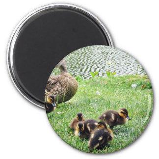 Ducks Animals 2 Inch Round Magnet