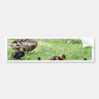 Ducks Animals Bumper Sticker