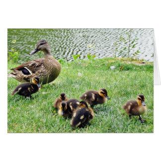 Ducks Animals Card