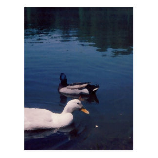 Ducks at the Lake CricketDiane Art & Photograph Postcard