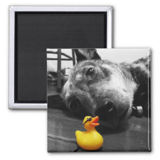 'Duck's Best Friend' Rubber Duck Magnet