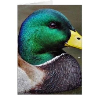 Ducks Bills Card