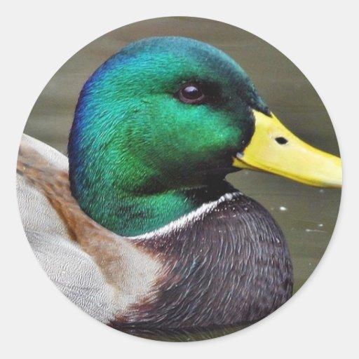 Ducks Bills Classic Round Sticker