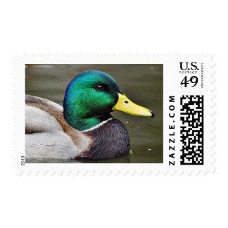 Ducks Bills Postage Stamp