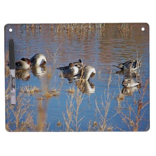 Ducks Birds Animals Wildlife Photography Dry Erase Board With Keychain Holder