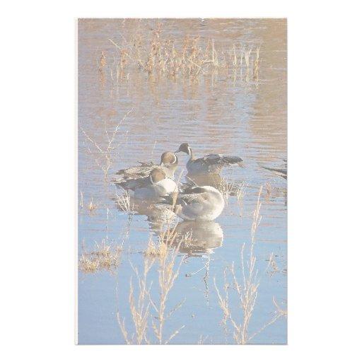 Ducks Birds Animals Wildlife Photography Stationery