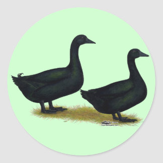 Ducks:  Black Cayugas Classic Round Sticker