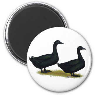 Ducks:  Black Cayugas Refrigerator Magnet