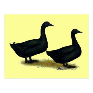 Ducks:  Black Cayugas Postcard