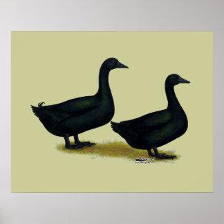 Ducks:  Black Cayugas Poster