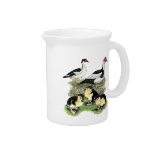 Ducks Black Pied Muscovy Family Beverage Pitcher