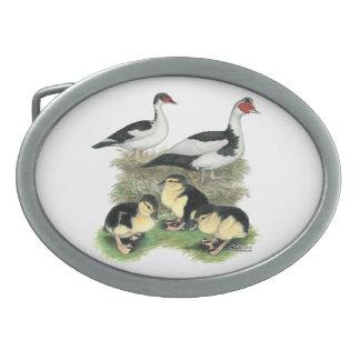 Ducks Black Pied Muscovy Family Oval Belt Buckle