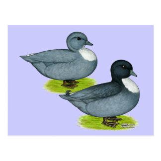 Ducks:  Blue Calls Postcard