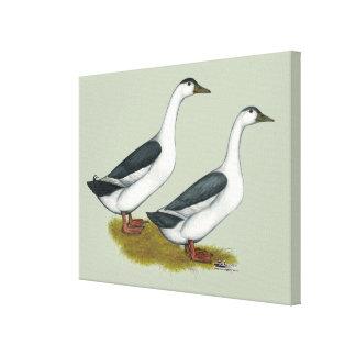 Ducks:  Blue Magpies Canvas Print