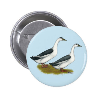 Ducks:  Blue Magpies Pinback Button