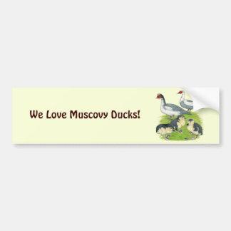 Ducks Blue Pied Muscovy Family Bumper Sticker
