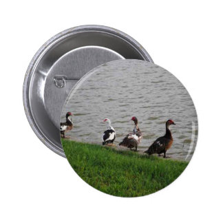 Ducks by a lake. 2 inch round button