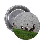 Ducks by a lake. pinback button
