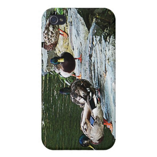 Ducks By a Pond iPhone 4/4S Covers