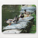Ducks by the Pond mousepad