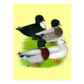 Ducks:  Call Quartet Postcard