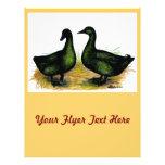Ducks:  Cayuga Pair Flyer Design