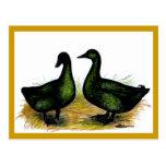 Ducks:  Cayuga Pair Postcard