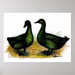 Ducks:  Cayuga Pair Poster
