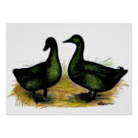 Ducks:  Cayuga Pair Posters