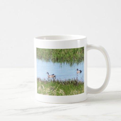 ducks chillin en kotz taza