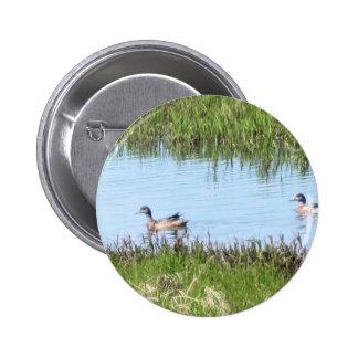 ducks chillin in kotz buttons