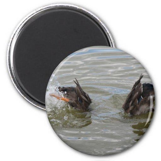 ducks diving magnet