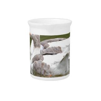 ducks drink pitcher