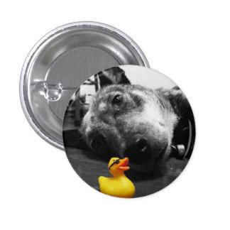 """""""Ducks el botón de goma del pato del mejor amigo""""  Pin Redondo De 1 Pulgada"""