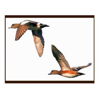 Ducks Flying Postcard