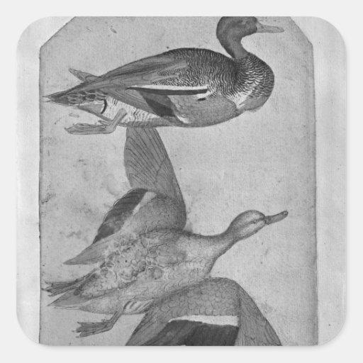 Ducks, from the The Vallardi Album Square Sticker
