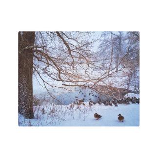 Ducks Gather Around A Frozen Pond Metal Photo Print