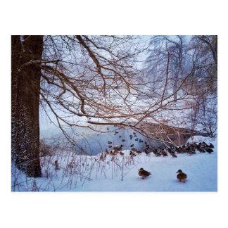 Ducks Gather Around A Frozen Pond Postcard