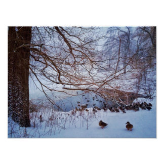 Ducks Gather Around A Frozen Pond Poster