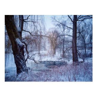Ducks In A Frozen Pond In New York's Central Park Postcard