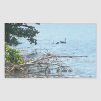Ducks in a Lake Rectangular Sticker