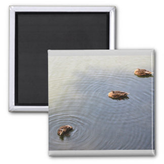 ducks in a pond 2 inch square magnet