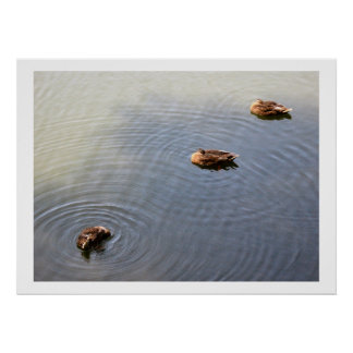 ducks in a pond posters