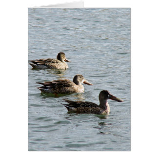 Ducks in a Row Card