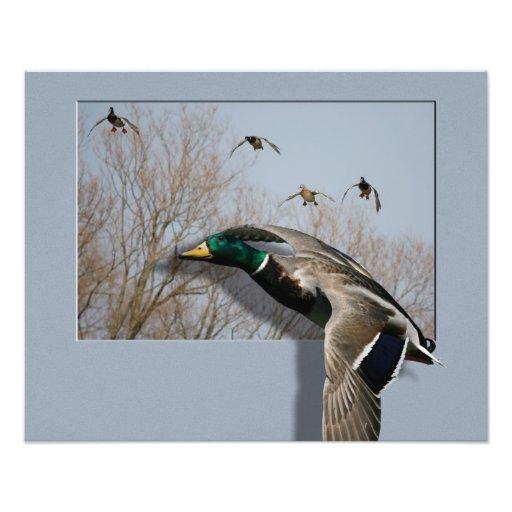 Ducks in Flight Composite-4 Print Photograph