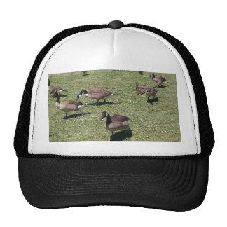 Ducks In Nature Trucker Hat