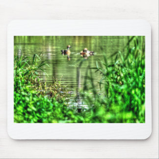 DUCKS IN POND RURAL QUEENSLAND AUSTRALIA MOUSE PAD