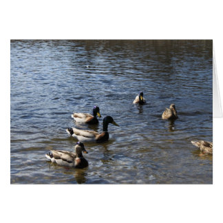 ducks in water, green timber park card