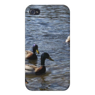 ducks in water, green timber park case for iPhone 4