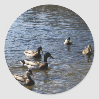 ducks in water, green timber park classic round sticker